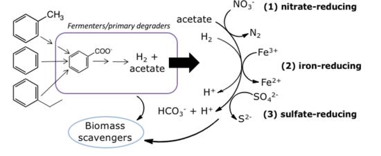 Biodegradation - Hydrocarbons - Enviro Wiki